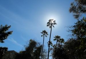 A few of the palms on Palm Walk