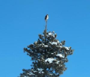 Hawkeye's lookout on Lookout Mountain