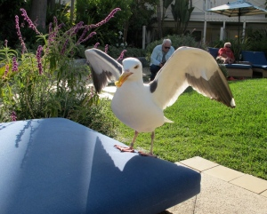 Ben, the considerate gull