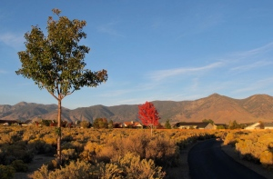 Contrasting types of trees and their colors