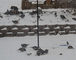 A snowy bird scene taken during a smaller, previous storm