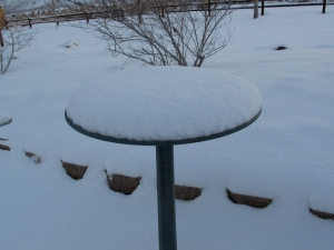 The snowed-in bird bath
