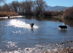 Enjoying a day at the Carson River