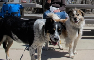 Lucy and Molly, great ranch dogs
