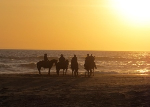 Horses on the beach at sunset