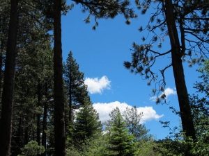 Trees and clouds attesting the the beautiful day!
