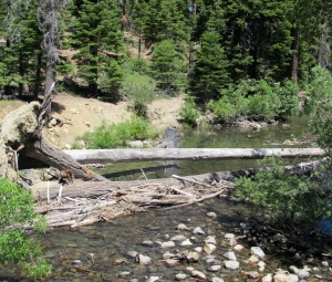 The headwaters of Taylor Creek