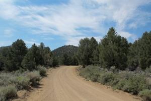 Pine Nut trees alongside the trail