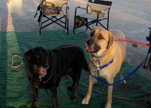 Jerri's four legged boys were waiting for us a camp. Buddy and Max (Maxwell von Biddle when he's in trouble).