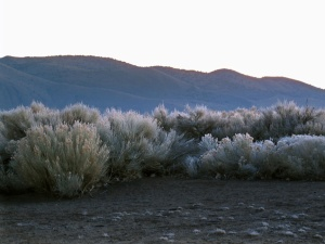 Dick caught a picture with a bit of frost on the sagebrush in the open space in back of my house. It's a pretty sight at dawn…if you like that sort of thing. Good thing I do.