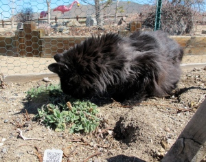 HERE IT IS!  Some catnip coming up from Mom's last year's garden.  YEA!!!  This stuff gets me going!