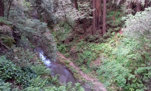 This view is not far from the trailhead and looks down on Aptos Creek.