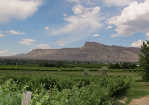 This is looking from a winery with Mt. Garfield and the Bookcliffs in the background. The Bookcliffs are a range that goes west into Utah.