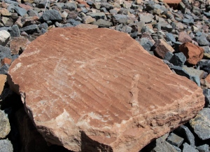 I think the picture with the red stone is cool. The wrinkles you see are ripples from a river or some water mass. The water lapped lazily on the shore and the little ripples were preserved. We saw several examples of this on our voyage.
