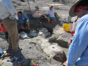 Volunteers digging out a large bone buried since 2008.