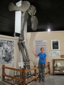 I  am standing beside the front leg bones of a brachiosaurus that stand over 18' tall.