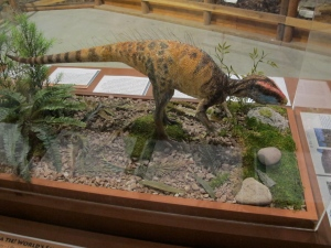 This is Fruitadens, a tiny adult dinosaur found in the Morrison formation just southwest of Fruita. It only weighed about one pound. Compare that to the Apatosaurus, found in the same rocks, that weighed in at 75,000 pounds!