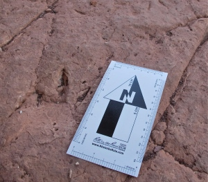 The track, to the left of the marker, is not large, maybe six inches. I think it was a small therapod.