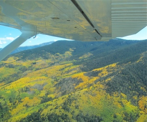 Aspen colors in the Sangre de Cristo Mountains