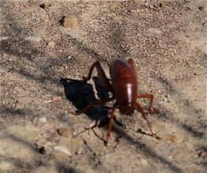 An alien bug