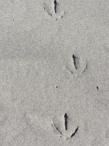 I wonder what that seagull had in mind when he was walking on the beach.