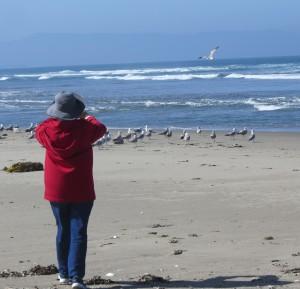 Dot loves the seagulls