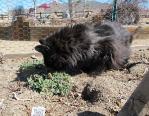 Tripping out on some early spring catnip.