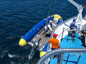BOB (Back on Board), our boat drivers put the Zodiacs on board the big ship and we left to go to Rábida Island.