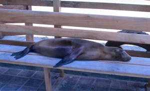 This sea lion greeted us on the dock as we prepared to go to the boat. He sort of waved a flipper at us.