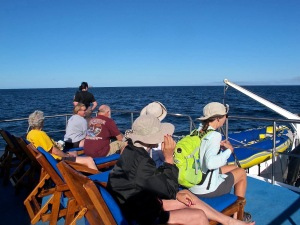 We were told there would be whales to see while underway on this steretch of the ocean, but Shirley was the only person to sight one.