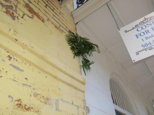 It's so humid in NOLA that ferns can grow right out of building walls. The weather is just right for a plethora of trees and plants.