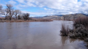The Carson River is breeching its banks at Cradlebaugh Bridge on Hwy. 395.