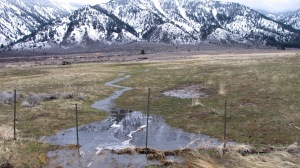 Tiny rivulets and streams were spawned by the rain and snowmelt. They seemed to be everywhere I looked.