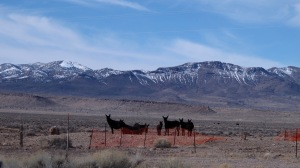 We saw these all black burros alongside the road. They were getting drinks of water behind that orange fence.