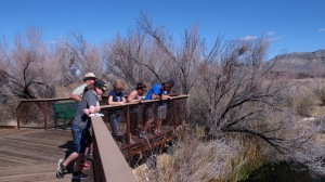 After seeing an introductory movie, we walked on an all-accessible boardwalk to Crystal Springs. Here are the rail birds looking at the springs.